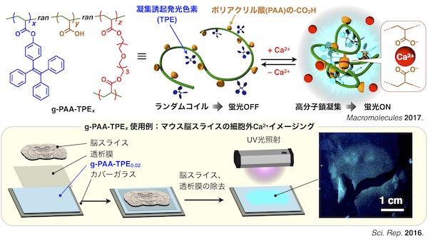 Research_jp_Ca.jpg